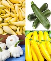 Squash Summer Medley Black Beauty-Golden-Gray Zucchini + White Scallop S... - $9.89+