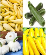 Squash Summer Medley Black Beauty-Golden-Gray Zucchini + White Scallop S... - $9.89+