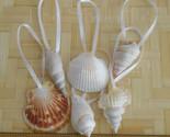 Seashell christmas 90b thumb155 crop