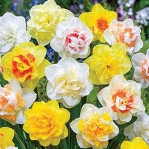 6 Bulbs-Beautiful Double Daffodils Mix for Naturalizing(Pack of 6 Bulbs) - $9.99