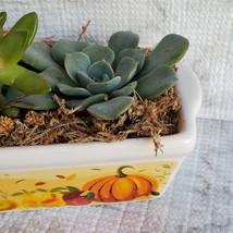 Fall Succulent Dish Garden in vintage harvest loaf pan, Ceramic pumpkin planter image 7