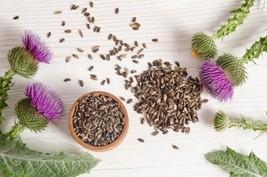 Milk Thistle Non GMO Heirloom Therapeutic Garden Herb Seeds Sow No GMO® USA - $3.36+
