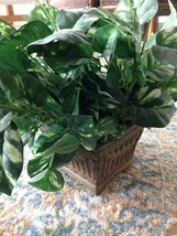 Silk plant in ceramic pot - $36.99