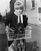 Elke Sommer 1960's pose riding bicycle with dog in basket 16x20 Canvas Giclee - $69.99