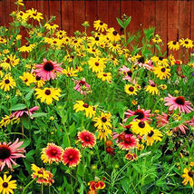 200 Mix Colorful Medium Height Wildflowers Seeds Wild Flower Garden Flower - $5.09