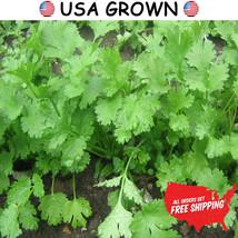 2 grams of Cilantro Herb Seeds, Leisure Coriander, FREE SHIPPING, NON GM... - $9.99