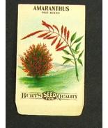 Vintage Burt's Flower Seed Packet 1910's Amaranthus - $4.99