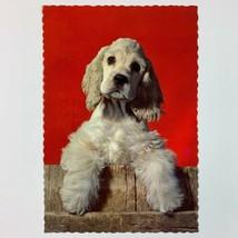 Cocker Spaniel Dog Unposted Hallmark Postcard - $8.42