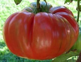 30 Red Brandywine Tomato Seeds 2019 ( Non-Gmo Free Shipping! - $5.12