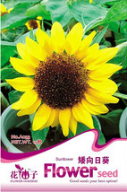 15 Pcs Bonsai Short Sunflower Seeds, Healthy Herbs Seeds TM - $8.56