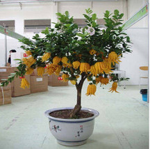 00 pcs bag font b bergamot b font seeds flower seeds bonsai cultivation font b planting thumb200
