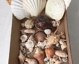 Lot of Seashells for Crafts Aquarium Nautical Beach Decor