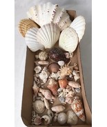 Lot of Seashells for Crafts Aquarium Nautical Beach Decor - $14.95