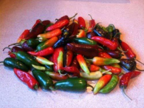 25 Seeds of Mix Capsicum Assorted Hot Peppers