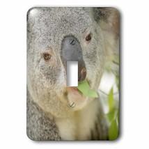 3dRose Queensland Koala bear, eucalyptus, San Diego Zoo, CA - US05 MPR00... - $44.07