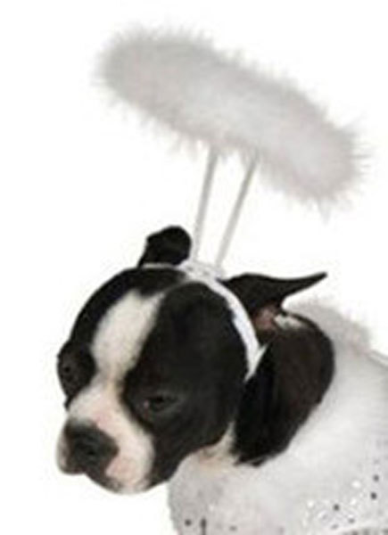 Angels Halo Pet Costume for Dogs