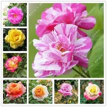 200pcs/bag Rare Mixed Colors Rose Seeds Rainbow Rose Seeds Bonsai Flower... - $4.21