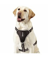 Comfortable Illuminating LED Harness for Pets, Small, Black - CLOSEOUT - $18.70