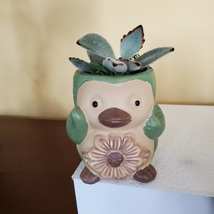 Green Penguin Pot & Succulent, Panda Plant, Kalanchoe Tomentosa, Animal Planter
