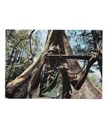 Africa Native Horn Player Traditional Dress Silk Cotton Tree 4x6 Dakar Postcard - $7.99