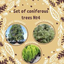 Set of coniferous trees seeds 4 / Giant redwood,Prickly juniper, Red jun... - $9.90