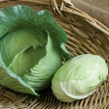 2 Packet – Gardening - Tendersweet Early Green Cabbage Seeds - WFW - $23.95