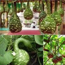 Jährliche Kürbis Samen Gemüse Samen Hausgarten Pflanzen Samen W2YN - $2.19