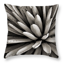 Agave, Cactus, Throw Pillow, fine art, home dec... - $41.99 - $69.99