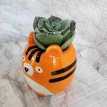 Tiger Animal Planter with Faux Succulent, Orange Cat Ceramic Plant Pot image 3