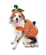 "Bootique Dog Pet Costume Pumpkin Hat S Small New 13-15"" Halloween 2689235 - $8.99"