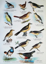 OUR BIRDS Nightingale Dipper Warbler Blackbird - Charming COLOR Litho Print - $11.25