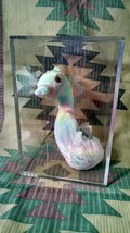 Ty Beanie Baby Neon Seahorse retired with errors! 1999 Display Case - $41.56