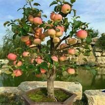 20 pezzi di melo nano molto raro frutta dolce piantata semi di alberi da... - $6.81