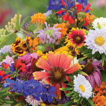 Butterfly and Hummingbird Mix Flower Seed / Beneficial Insect Flower Seeds - $17.00