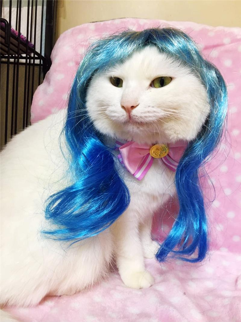 Cat Clothes Hair Wig Costume Pet Funny Hat Dress Puppy Lovely Cosplay Hairpiece