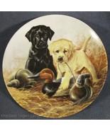 Perfect Set Labrador Retrievers Collector Plate Field Puppies Lynn Kaatz... - $27.95