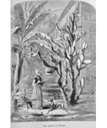 FLORIDA Garden in St. Augustine Cactus Flamingo Dog - 1883 German Print - $16.20