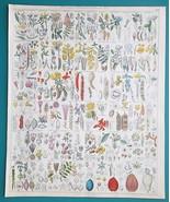 BOTANY Plants Cashew Pistacia Mango Tree Flax Canarium - 1843 HC Color P... - $39.60