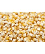 Common CORN kernels seed for grow planting or store from Oz up to Pounds - $0.99+