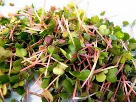 Daikon-Red Rose Radish Sprouting Mix -  A ZESTY MIX !!!  FREE SHIPPING!!... - $1.99+