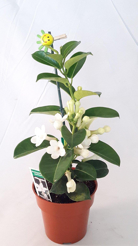 71nMlCmw_8L__SL1500_ Selling Houseplants on