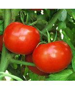 250 Seeds - Non GMO - Rutgers Tomato - $8.99
