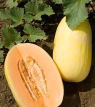 12 Seeds of Cucumis melo - Crenshaw Melon - $11.74
