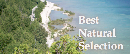 A welcome banner for Best Natural Selection