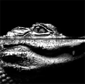 A welcome banner for Florida Gator Garage Raider