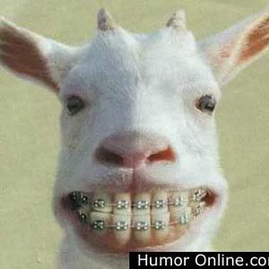 Goat braces