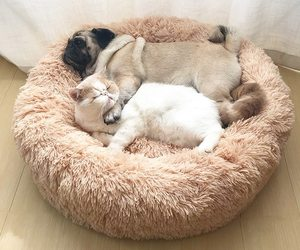 Dog Bed Sofa Round Plush Mat For Dogs Large Labradors Cat, an item from the 'Dog Costumes and Toys' hand-picked list