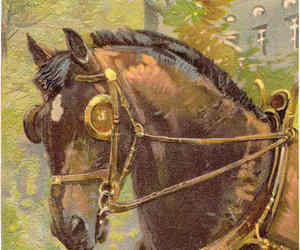 Old Faithful Paul Finkenrath of Berlin Signed Post Card , an item from the 'Community Picks: Horsin' Around' hand-picked list