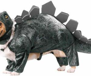 Animal Planet PET20105 Stegosaurus Dog Costume, Large, an item from the 'Dog Costumes and Toys' hand-picked list