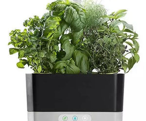 MiracleGro AeroGarden Harvest with Gourmet Herbs Seed 6 Pod Kit - Black, an item from the 'Finds for the Foodie ' hand-picked list